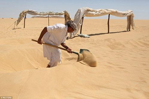 Kendilerini kuma gömüyorlar çünkü... 1