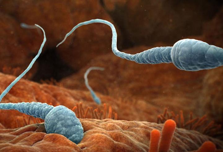 forum-kak-lechit-nepodvizhnost-spermatozoidov