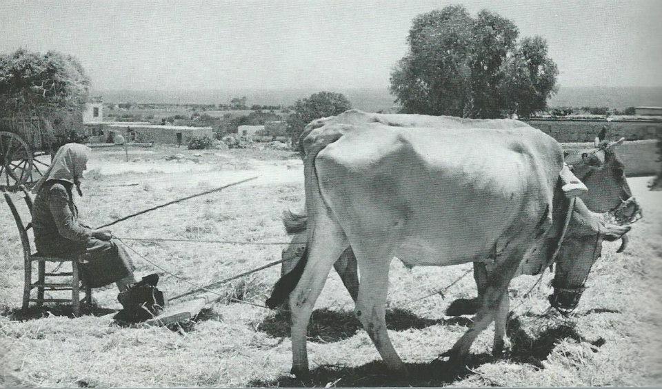 1928'İN KIBRIS'I 114