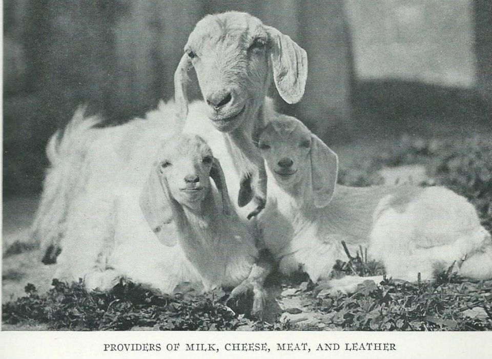 1928'İN KIBRIS'I 5