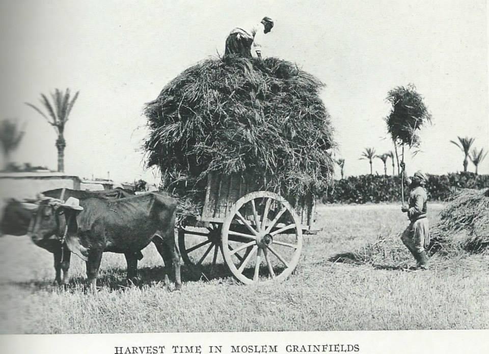 1928'İN KIBRIS'I 55
