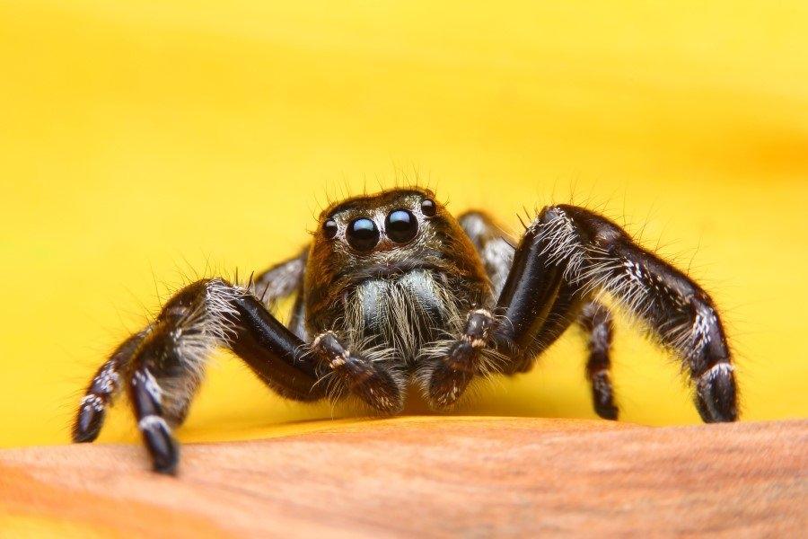 İnsanlar örümceklerden neden çok korkar? 1