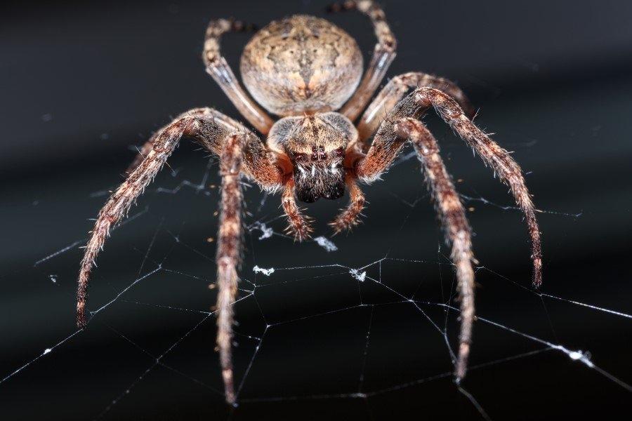 İnsanlar örümceklerden neden çok korkar? 2