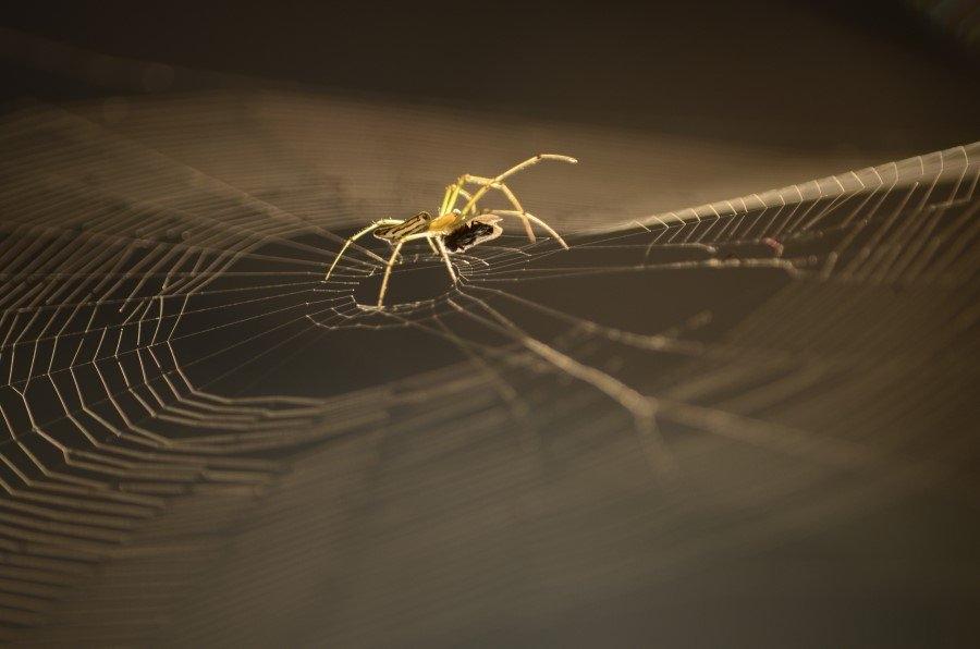 İnsanlar örümceklerden neden çok korkar? 3