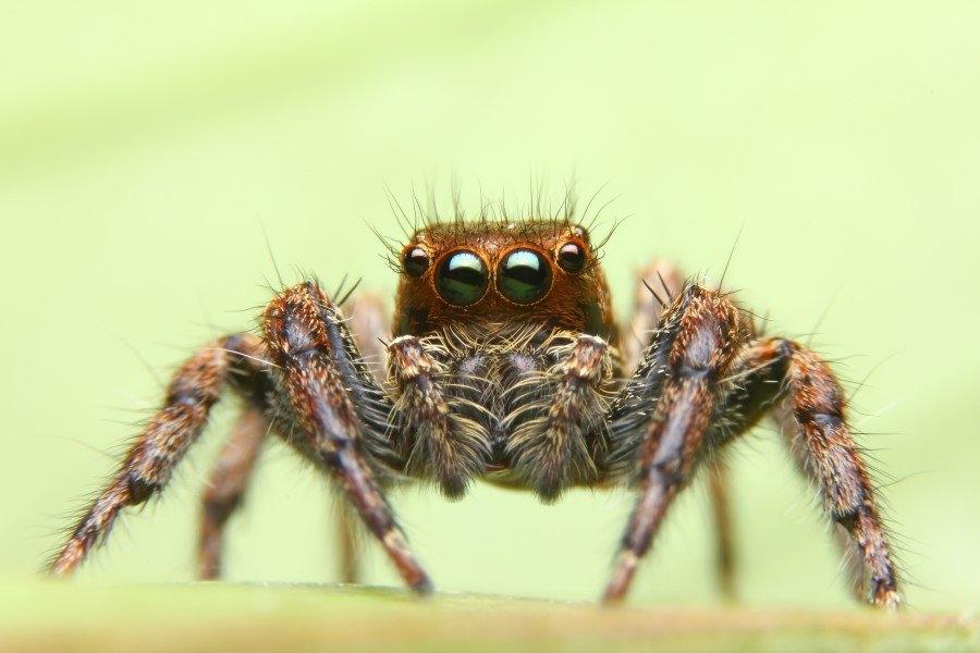 İnsanlar örümceklerden neden çok korkar? 6