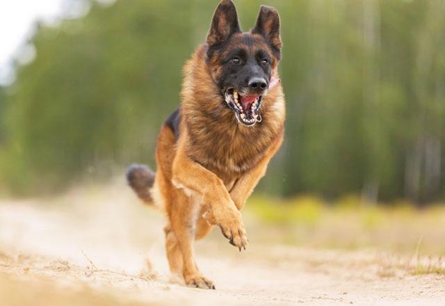 Saldırgan köpek görünce sakın bunu yapmayın! 1