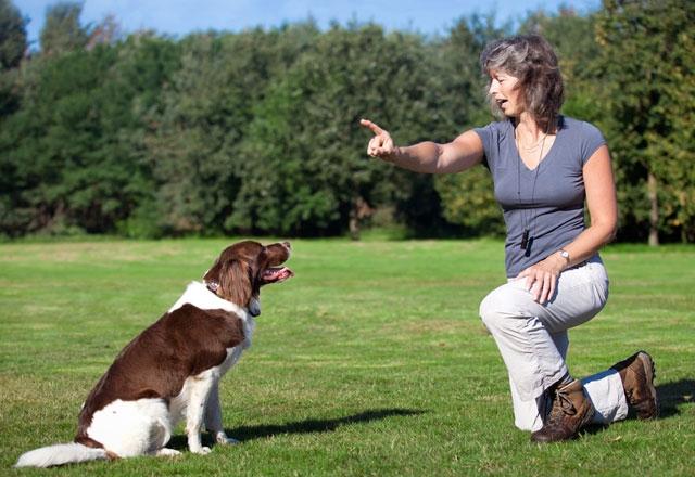 Saldırgan köpek görünce sakın bunu yapmayın! 5