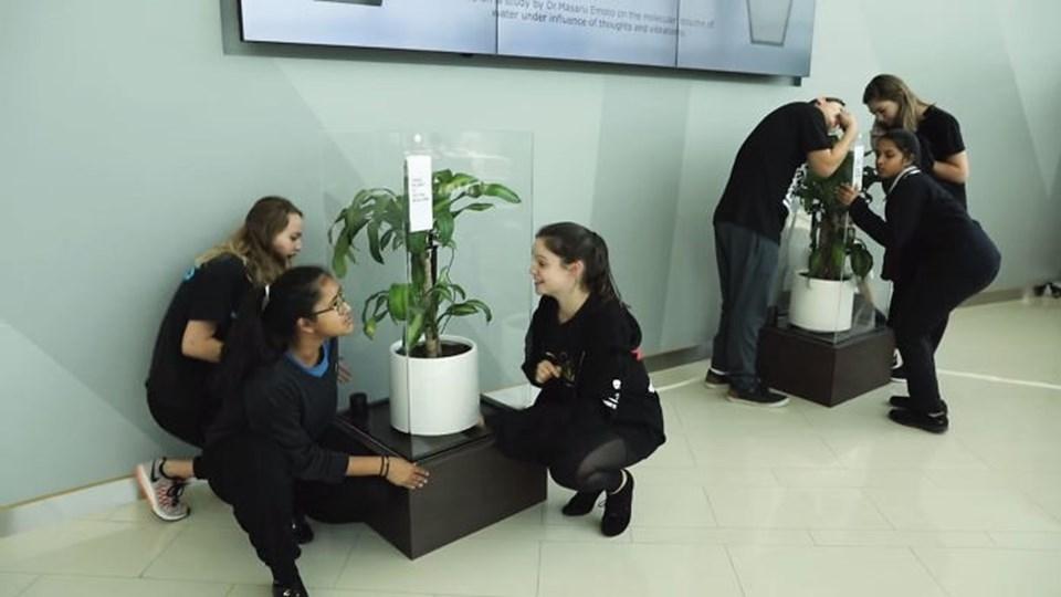 Sürekli küfür edilen çiçek sararıp soldu 1