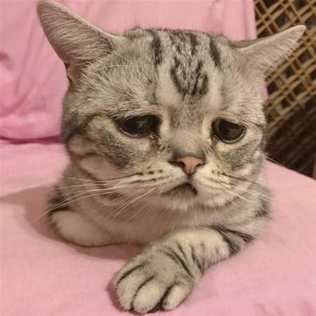 Dünyanın en üzgün kedisi 1