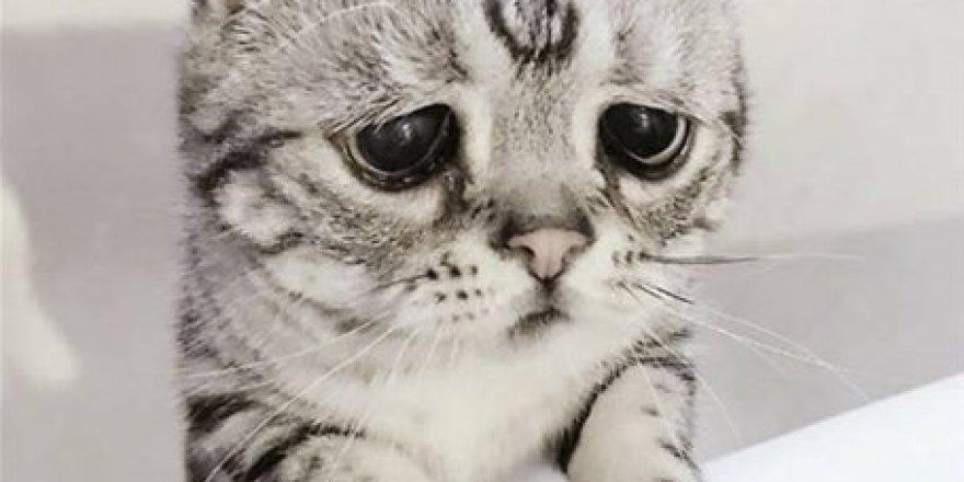 Dünyanın en üzgün kedisi