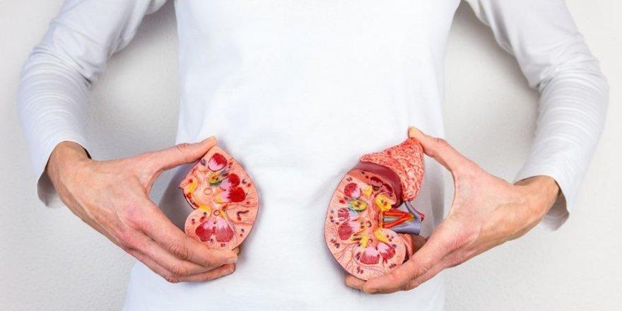 Böbrek sağlığı hakkında doğru sanılan 8 yanlış