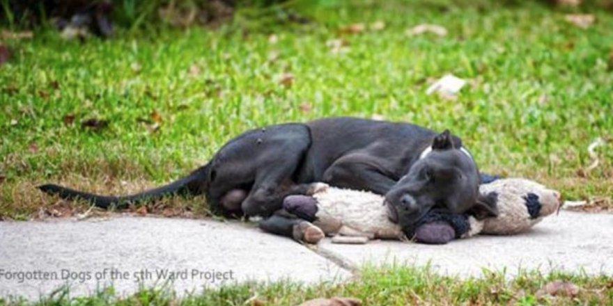 Sokakta Yatan Köpeği Görünce Yanına Gitti