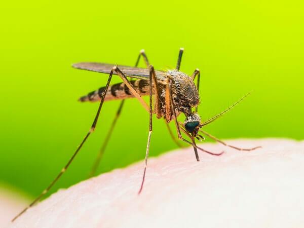 Sadece 3 Malzemeyle Hazırlayabildiğiniz Ev Yapımı Tuzakla Sivrisinekleri 1