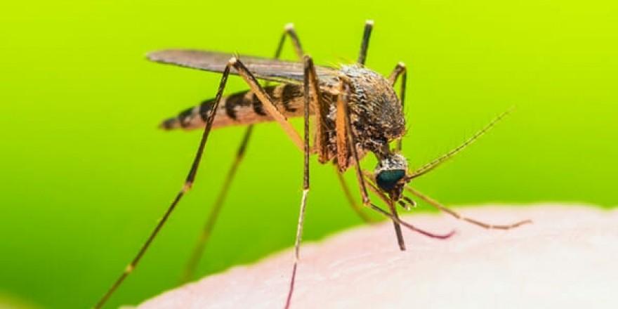 Sadece 3 Malzemeyle Hazırlayabildiğiniz Ev Yapımı Tuzakla Sivrisinekleri