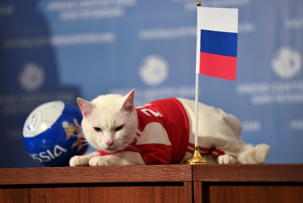 'Kahin Achilles' Dünya Kupası için ilk tahminini yaptı! 1