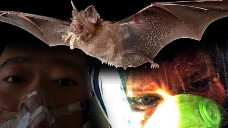 Bilim insanları corona virüs araştırmasını sonuçlandı! 1