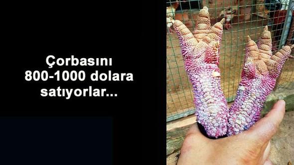ÇORBASI 800-1000 DOLAR...
