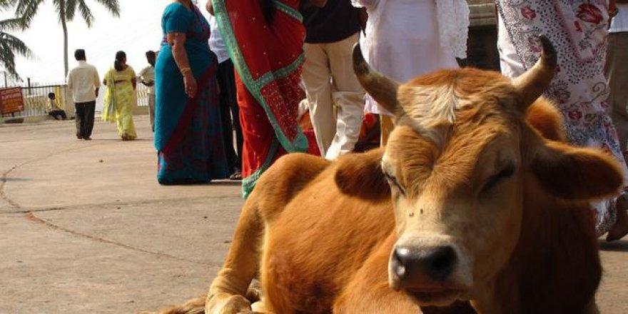 İnek kesmek isteyen Müslümanlara Hindistan'da saldırı