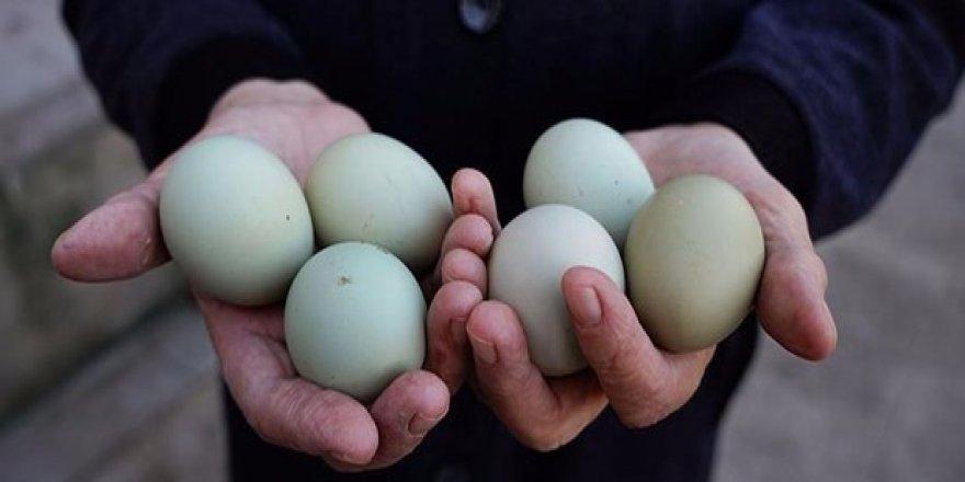 Yeşil yumurtada daha mı çok vitamin var?