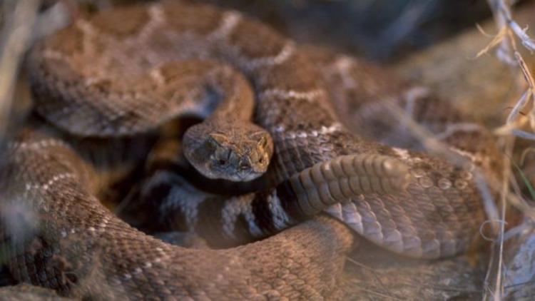 Kafası kopuk yılan adamı ısırdı