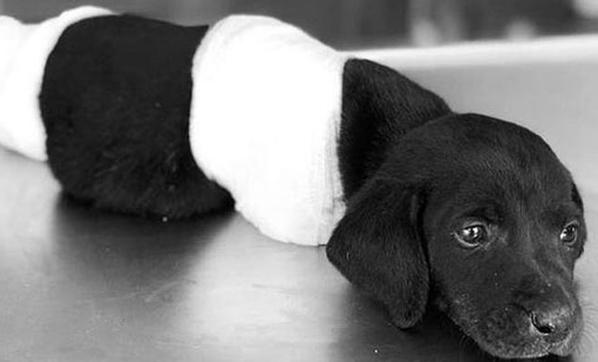 'O köpeğe ben zarar vermedim'