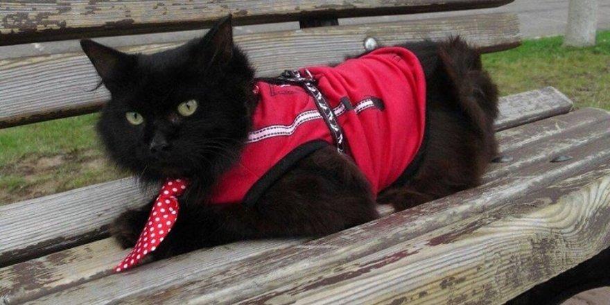Moskova'daki bir müzenin kedi 'çalışanı' Begemot, kaçırıldı