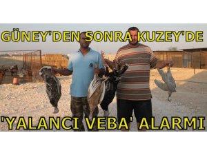GÜNEY'DEN SONRA KUZEY'DE 'YALANCI VEBA' ALARMI!