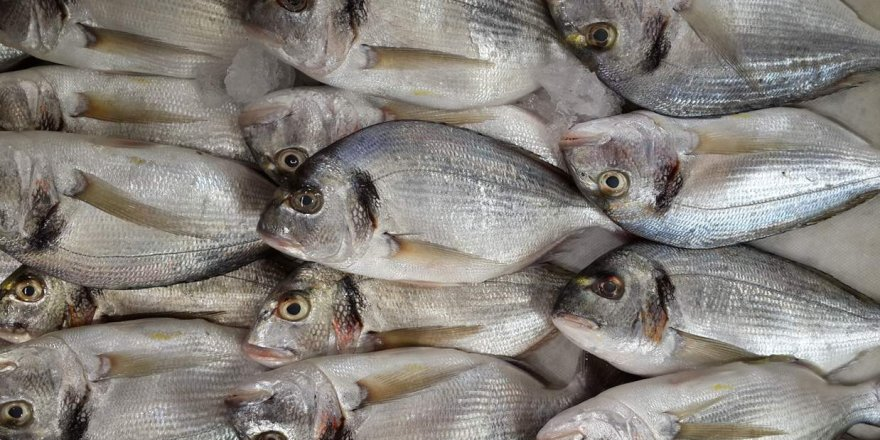Çipura balığı konusunda tüketici yanıltılıyor