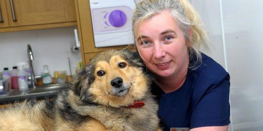 KKTC'de Yaşayan İngiliz Aile, 'Hayvanlara Eziyet'ten Yargılanacak