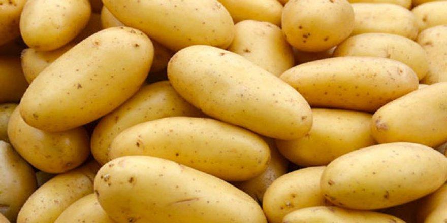 100 ton patates iade edildi