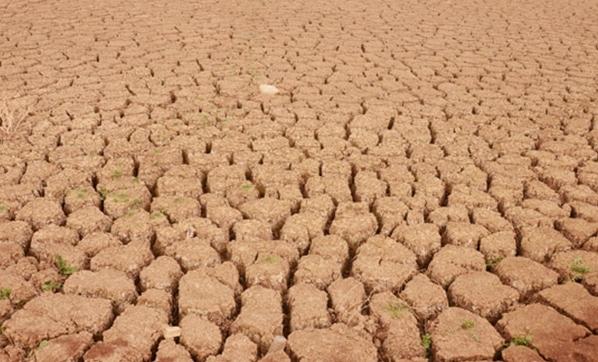 Ülkede çiftçiler intihar ediyor!