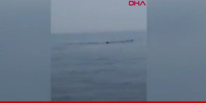 Balıkçıların balina şaşkınlığı