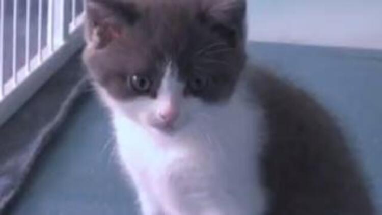 Ölen kedisini 35 bin dolara klonlattı!