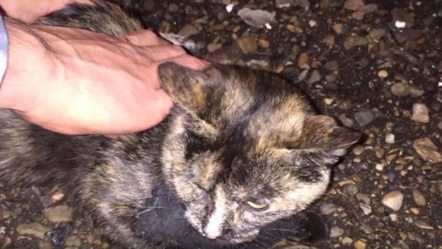 Kurye kedi gözaltına alındı!