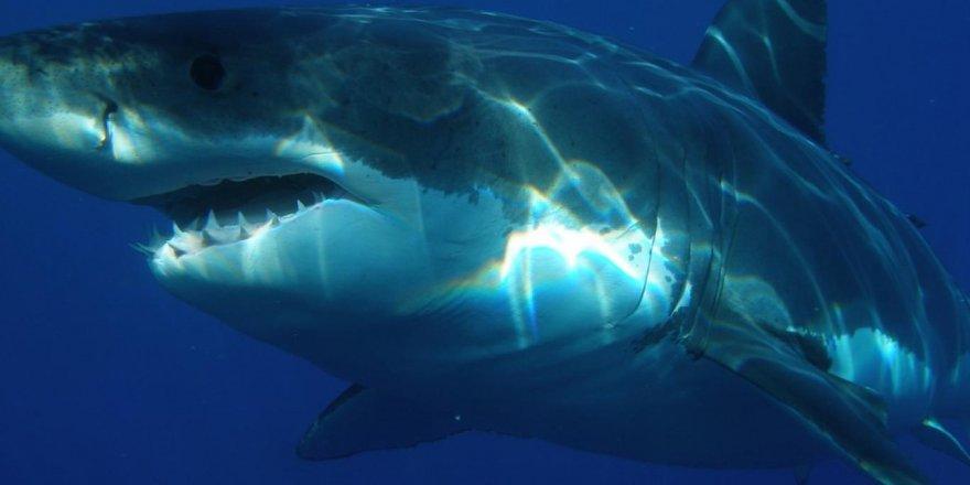 Köpekbalığı saldırısına uğrayan sörfçü yumruklayarak kurtuldu