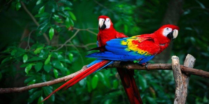Papağan türleri ve özellikleri nedir? İşte konuşan papağan isimleri