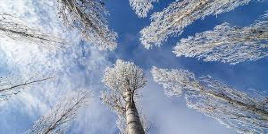 Yarın ve Pazar sabahı yer yer don olayı bekleniyor.