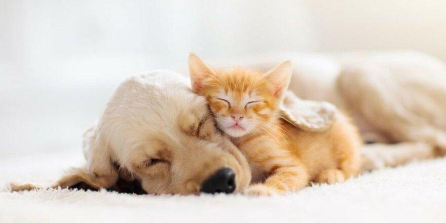 Evcil hayvan sahibi olmak stres azaltıyor