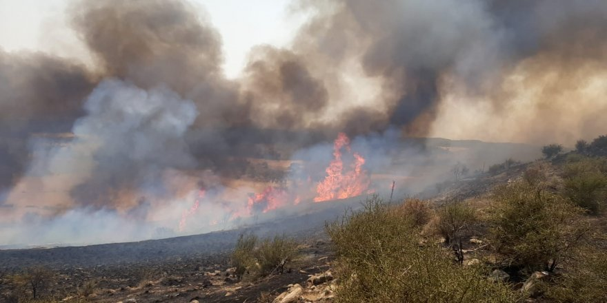 Arıdamı köyünde yangın