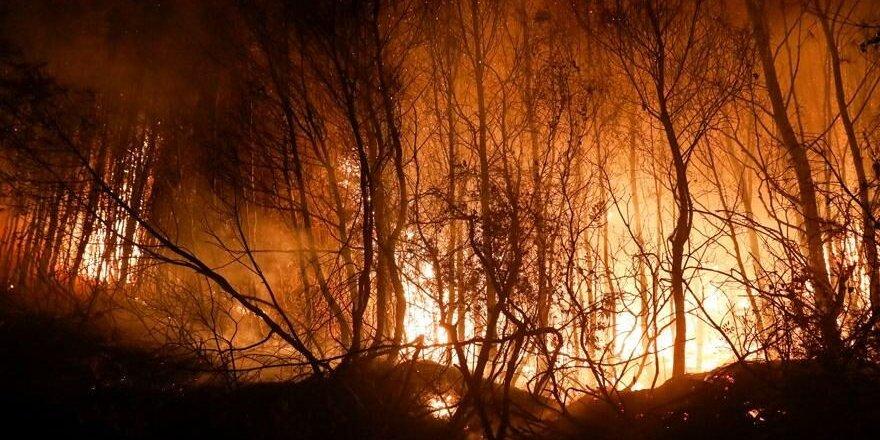 Avrupa yangınla mücadele ediyor: 800'den fazla yangın