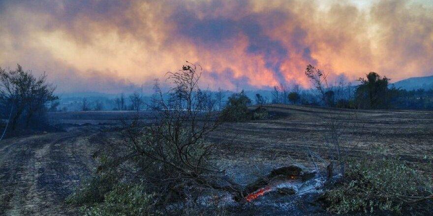 İklim krizinin yıkıcı etkisi… Yangında yok olan alan 13 yıllık ortalamanın üzerinde