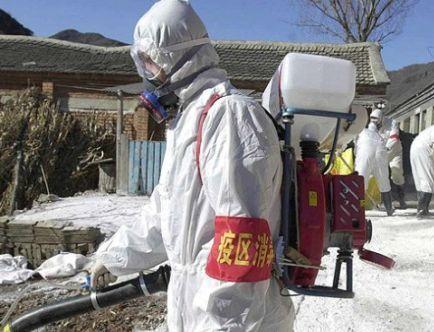 YENİ KUŞ GRİBİ: H7N9