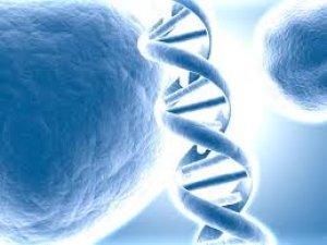 ÖDENEK EKSİKLİĞİ DNA ANALİZLERİNİN TESLİMİNİ GECİKTİRDİ