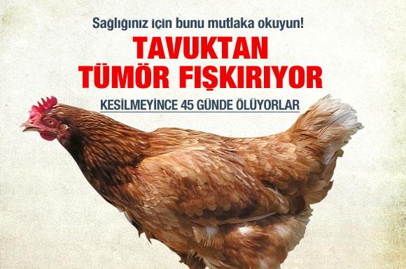 Tavuk diye önünüze konulan hayvana dikkat edin