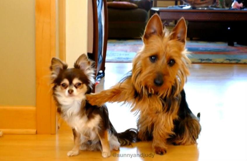 İspiyoncu köpek arkadaşını sattı!
