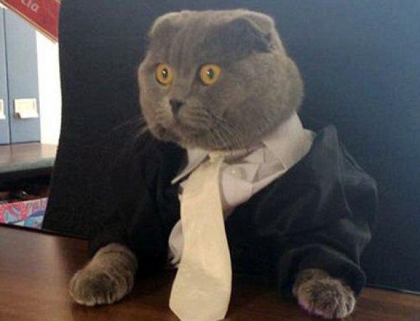 Kedi 'İletişim Müdürü' oldu
