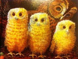 Kırmızı Kanatlı Baykuş Ve Yavru Baykuşlar