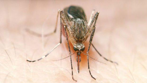 Ve nedeni belli oldu... Sivrisinekler...