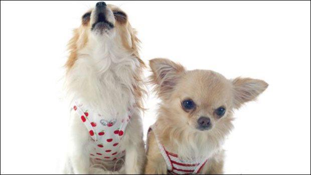 İtalya'da köpeklere havlama yasağı