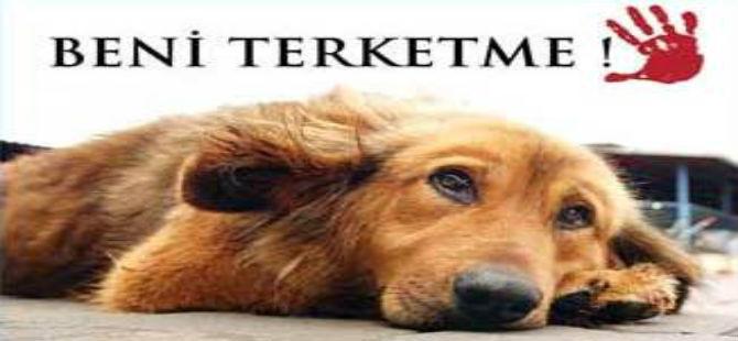 """""""KÖPEĞİNİZİ TERK ETMEYİN"""" ÇAĞRISI"""